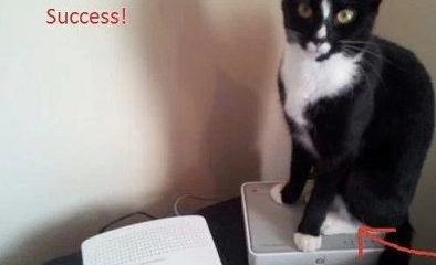 Liam's cat is well off with two routers! Credit photo: https://consumermediallc.files.wordpress.com/2012/03/success.jpg?w=515&h=458