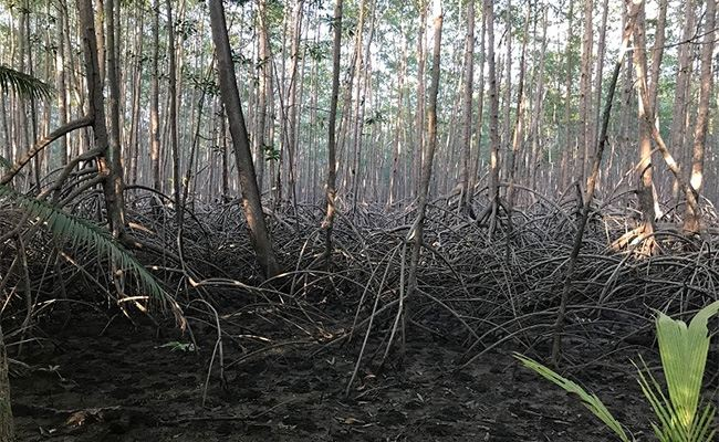 Apple Helps Save a Mangrove Forest in Columbia
