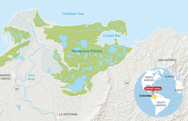 apple helps save a mangrove forest in columbia map - Apple Helps Save a Mangrove Forest in Columbia
