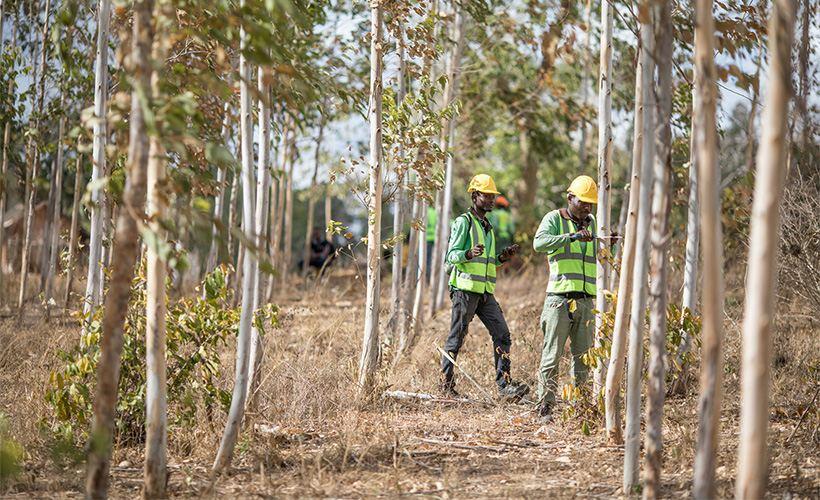 battle for the earth apples ecological program kenya - Battle for the Earth: Apple's Ecological Program